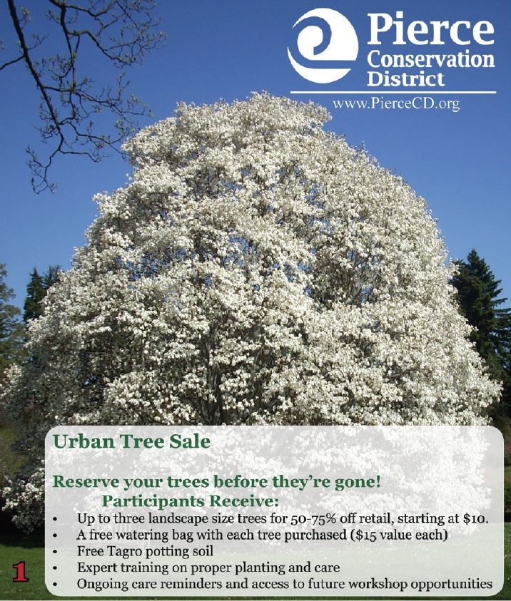 Urban Tree Sale