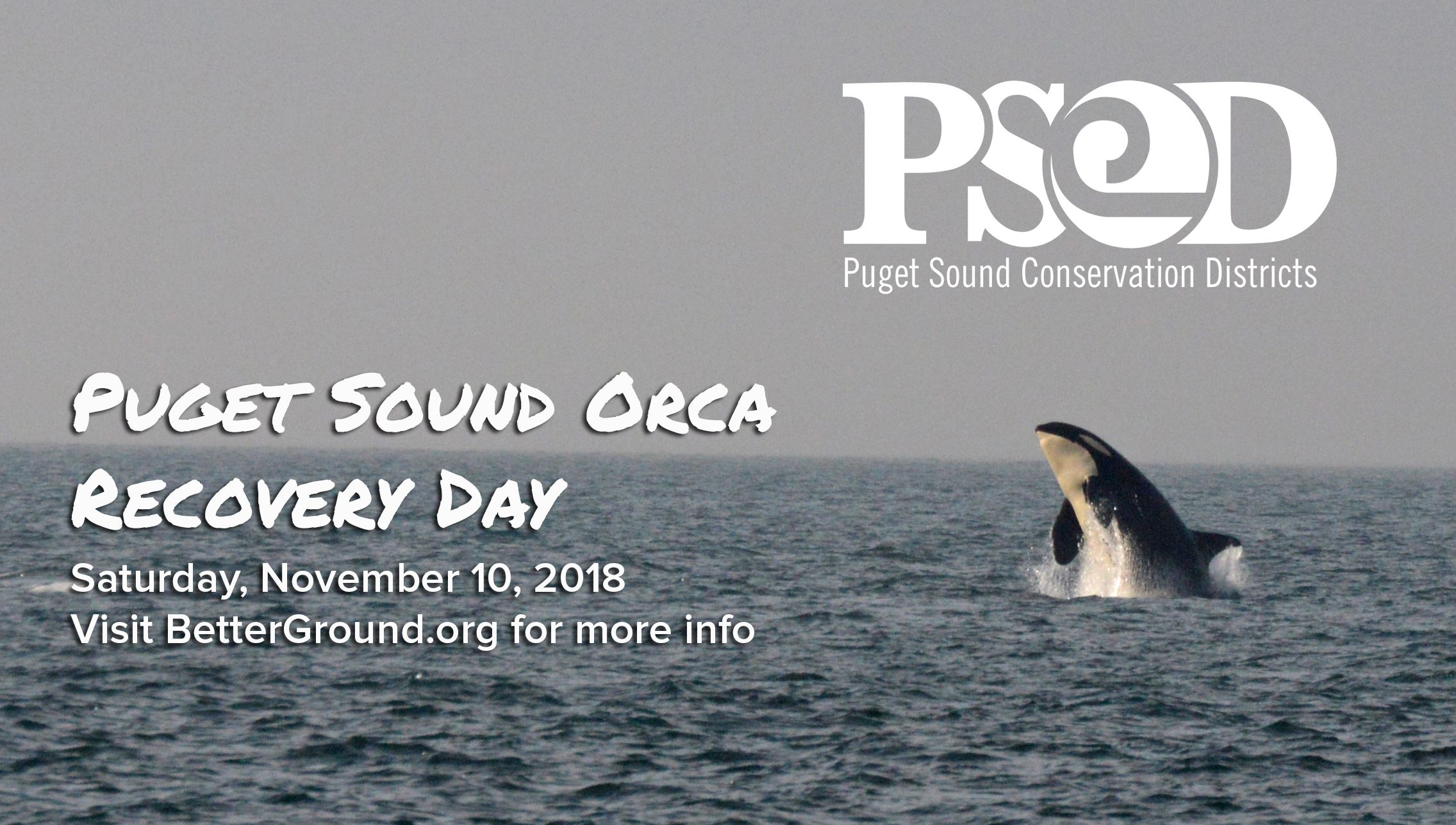 Orca Recovery Day Image