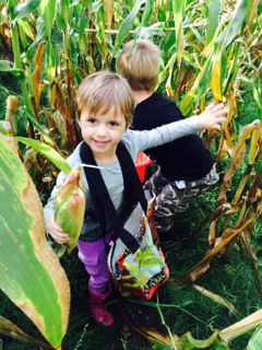 Corn Glean_child