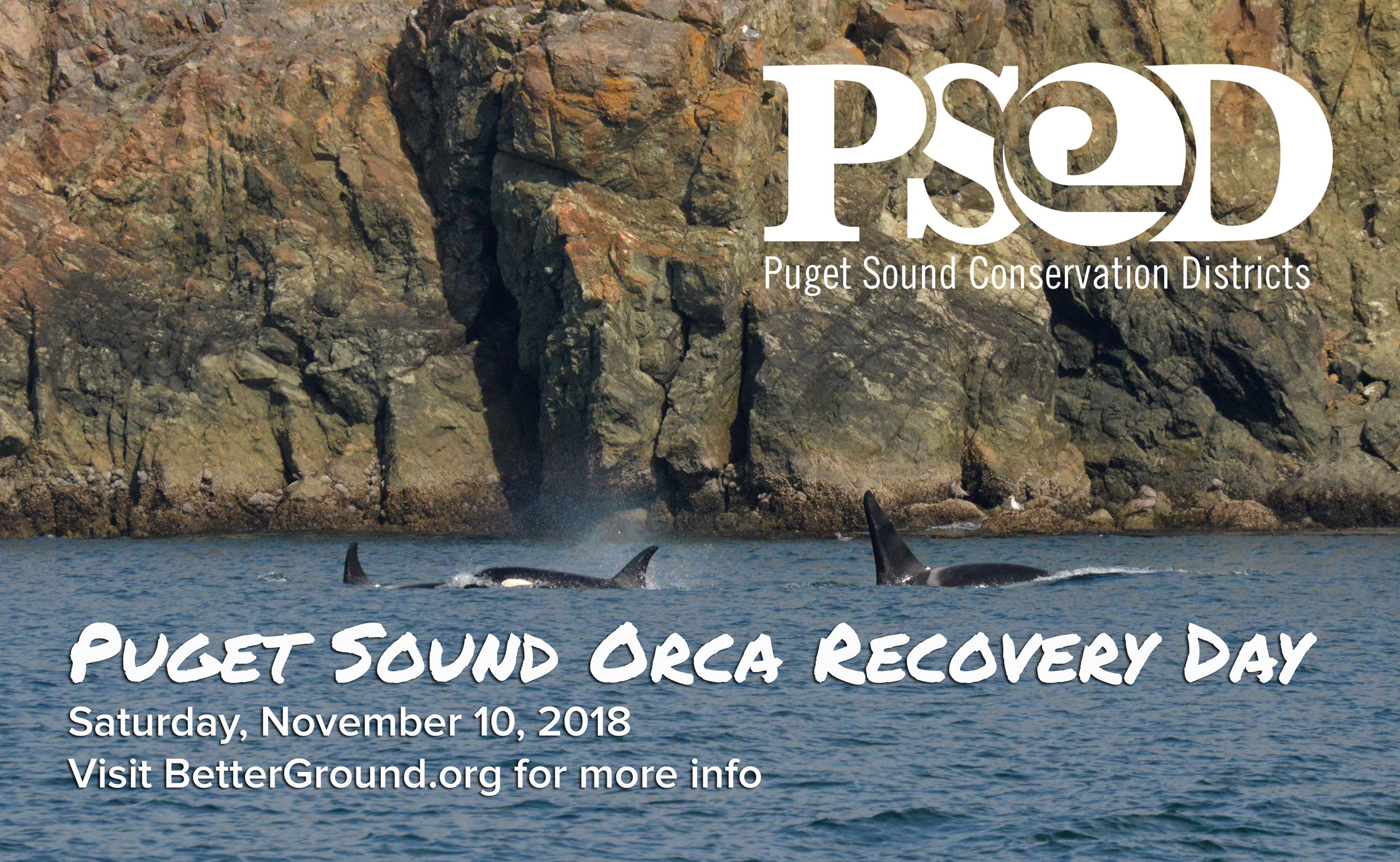 Orca Recovery Day Image 2